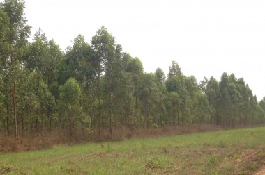 1er puits de carbone en RDC